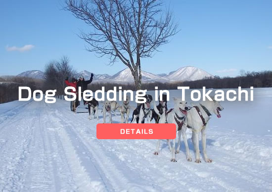 Dog Sledding in Tokachi