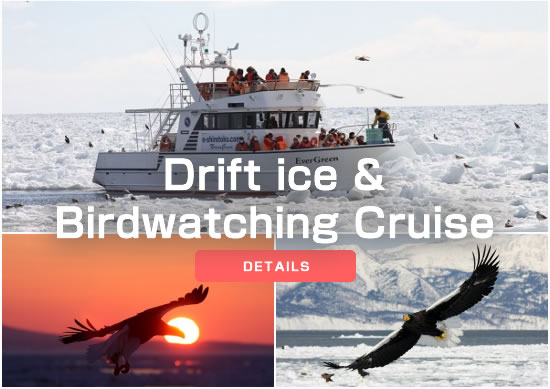 Drift ice & Birdwatching Cruise