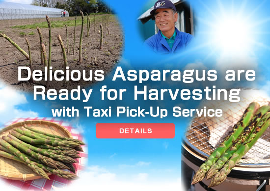 Delicious Asparagus are Ready for Harvesting with Taxi Pick-Up Service
