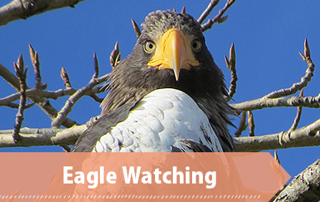 Eagle Watching