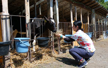 【Eniwa】Farm Experience with Private Transfer