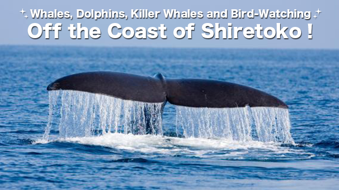Off the Coast of Shiretoko: Whales, Dolphins, Killer Whales, and Bird-Watching