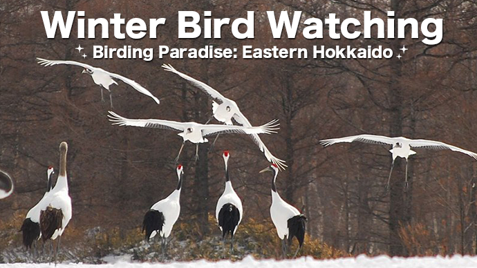Winter Bird Watching in Kushiro Eastern Hokkaido